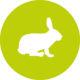 ViPiBaX das Kaninchen