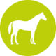 ViPiBaX das Pferd